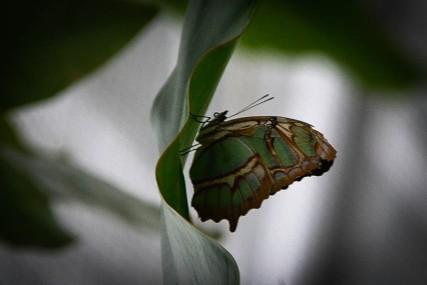 Schmetterlinge (1 von 1)-10