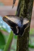Schmetterlinge (1 von 1)-11