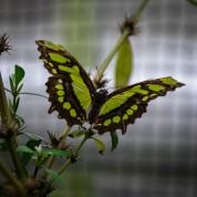 Schmetterlinge (1 von 1)-12