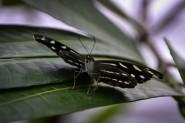 Schmetterlinge (1 von 1)-13