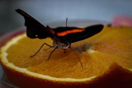 Schmetterlinge (1 von 1)-14
