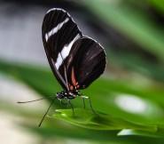 Schmetterlinge (1 von 1)-15