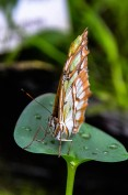 Schmetterlinge (1 von 1)-17
