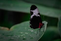 Schmetterlinge (1 von 1)-3