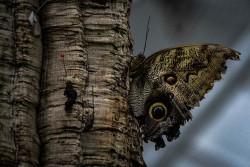 Schmetterlinge (1 von 1)-4