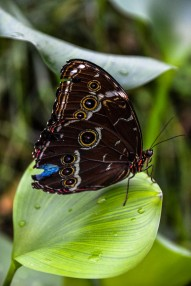 Schmetterlinge (1 von 1)-8