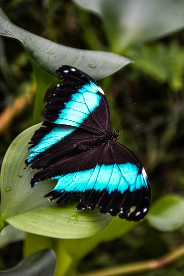 Schmetterlinge (1 von 1)-9