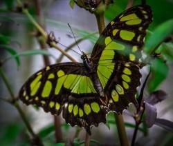 Schmetterlinge (1 von 1)