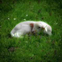 Kleines Päuschen