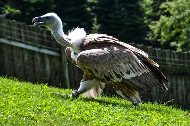 Adlerwarte Pfänder (1 von 1)