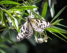 Mainau-Schmetterlinge (1 von 1)-2
