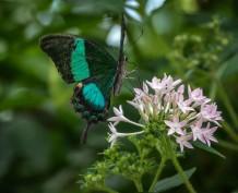 Mainau-Schmetterlinge (1 von 1)-4