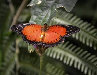 Mainau-Schmetterlinge (1 von 1)-6