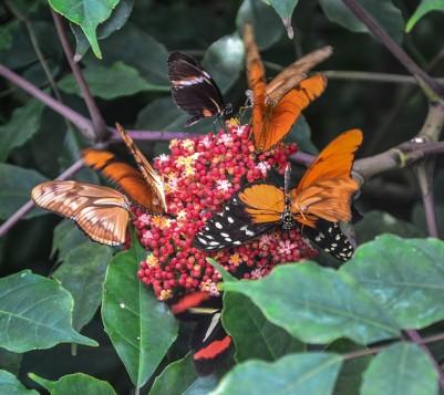 Mainau-Schmetterlinge (1 von 1)
