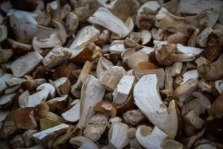 Steinpilze - auch eine Delikatesse