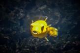Under the Sea (1 von 1)-6