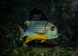Under the Sea (1 von 1)-7
