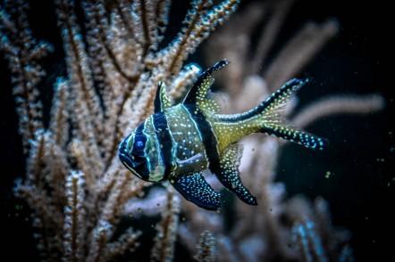 Under the Sea (1 von 1)