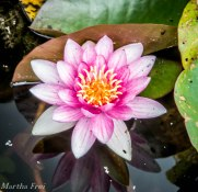botanischer garten sommer-13