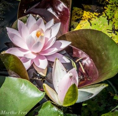 botanischer garten sommer-17