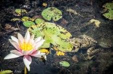 botanischer garten sommer-19