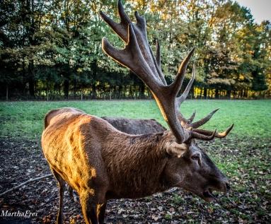 wildtierpark-5332