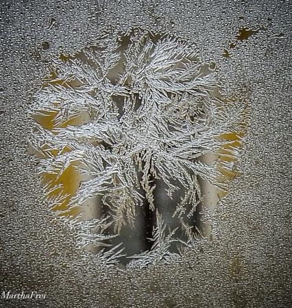 eisblumen-2838