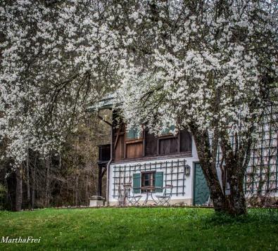 linderhof-8602
