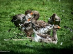 wildtierpark poing-0136
