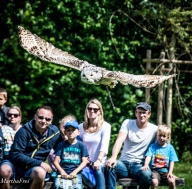 wildtierpark poing-0207