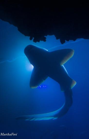 sealife 1-3420