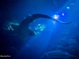 sealife 2-3440