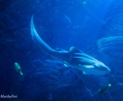 sealife 2-3441