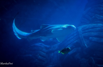 sealife 2-3447