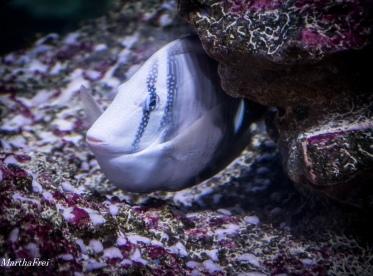 sealife 2-3723