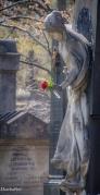 südfriedhof2-7674
