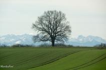 Mein Lieblingsbaum, jedesmal, wenn ich an ihm vorbei fahre, muss ich ihn fotografieren.