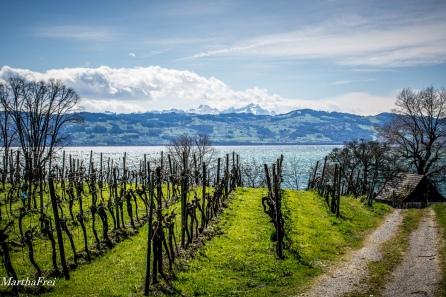 bodensee-8057